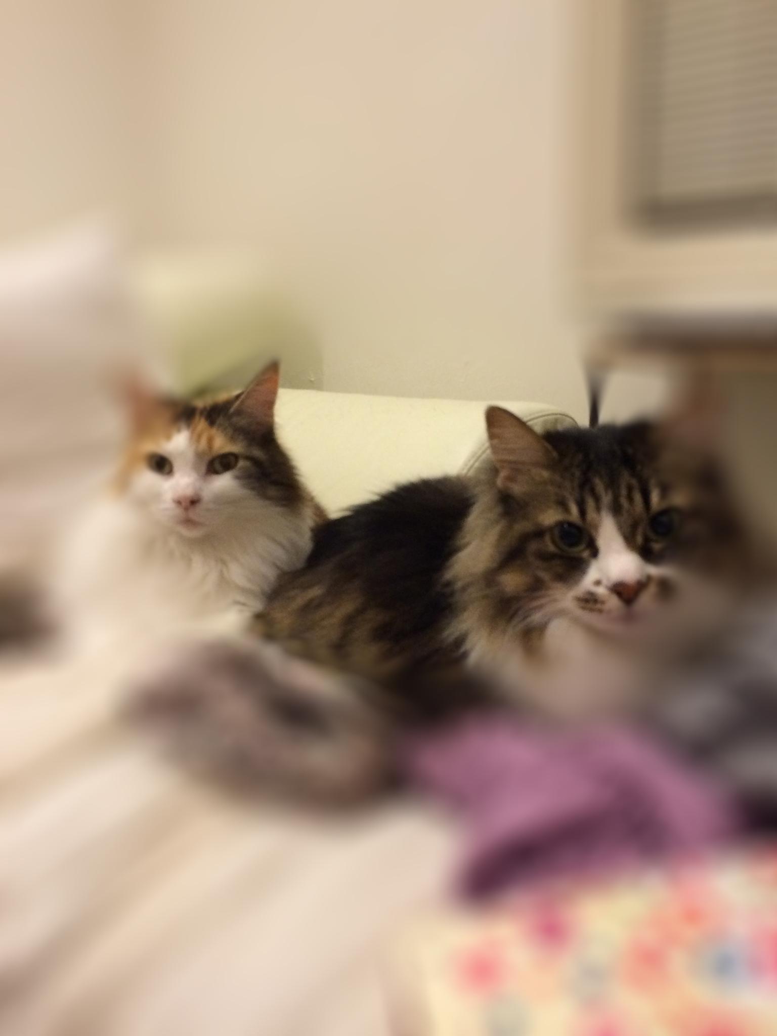 ソラとムギ