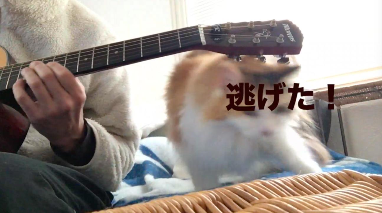 ムギとギター